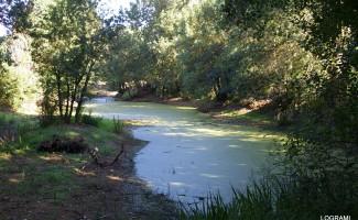Le contrat pour la Loire et ses annexes