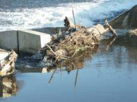L'entretien des dispositifs de franchissement pour les poissons migrateurs