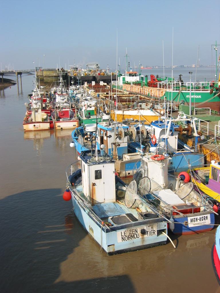 La Commission européenne demande l'interdiction de la pêche des anguilles en atlantique et mer du nord