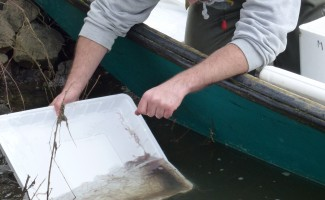 Publication de l'appel à projets d'alevinages d'anguilles 2016-2017