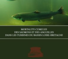Briand_et_al_2015_mortalite_cumulee_saumon_anguilles_couv