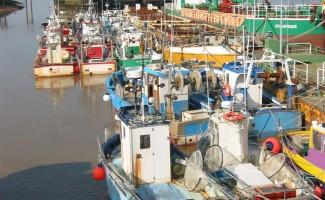 Fermeture de la pêche maritime de la civelle pour l'UGA Loire, Côtiers Vendéens et Sèvre niortaise