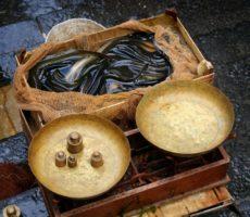 commerce de l'anguille