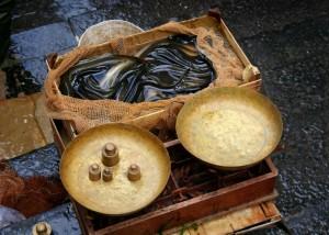 La Commission européenne envisage de fermer la pêche de l'anguille en mer Baltique