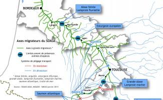 Un observatoire des poissons migrateurs de la Garonne