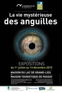 Affiche de l'exposition : La vie mystérieuse des anguilles