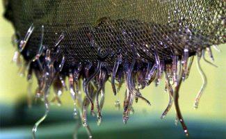Synthèse des mesures de pêche de l'anguille 2016