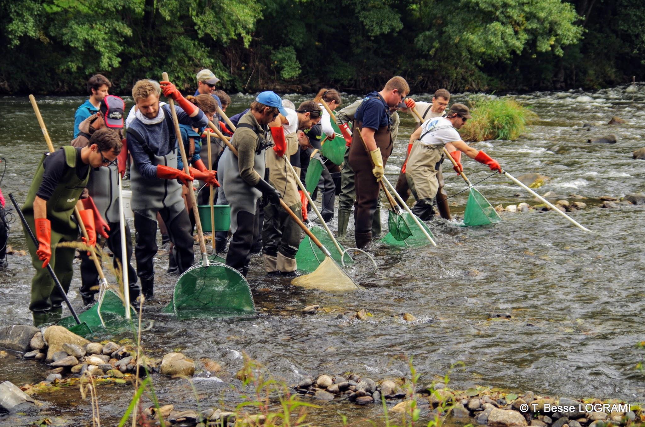 Calibration des pêches «Indice d'abondance» saumon