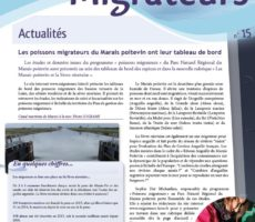 Paroles de Migrateurs N15