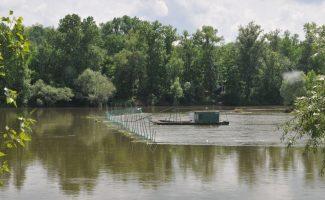 Le programme ALOSA suit les aloses de la Loire moyenne