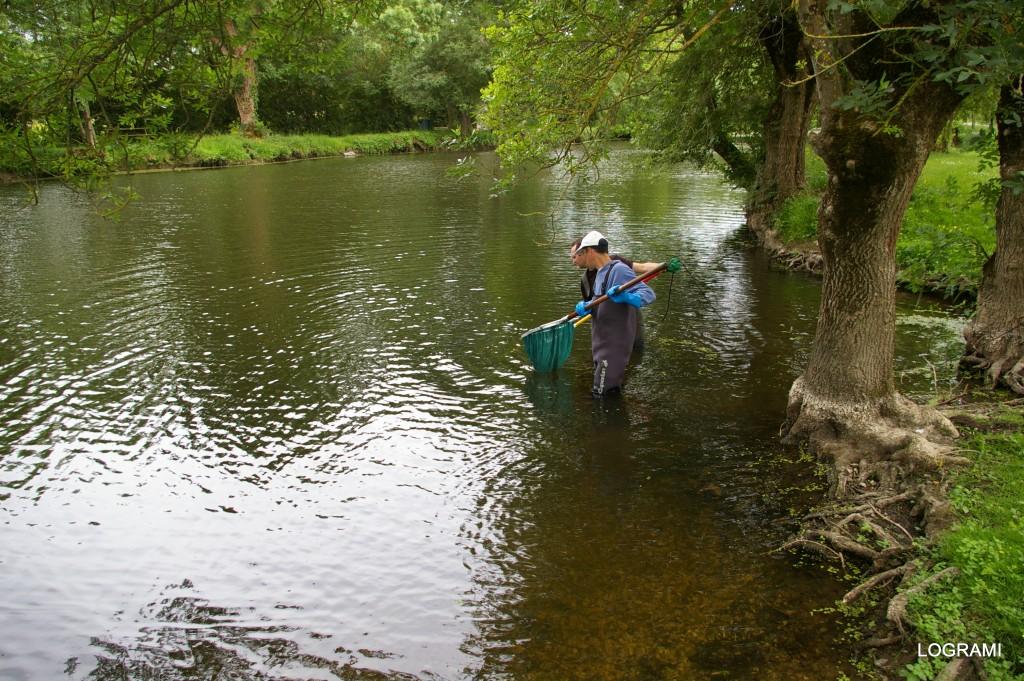 Suivi des anguilles dans une boire de la Loire en 2010