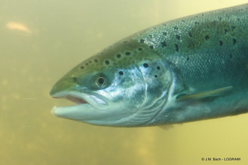 rencontres de saumon rencontres cancer femme conseils